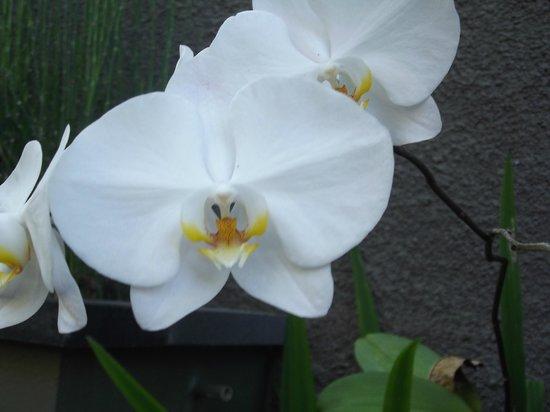 Abi Bali Resort & Villa : Flowers