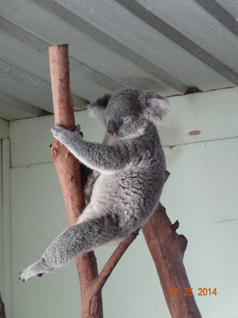 Featherdale Wildlife Park: Such a cutie