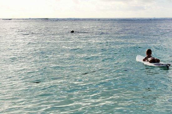 Ha'atafu Beach Resort: Surfing