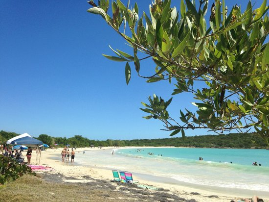 Under the shade of the Mangrove trees at Playa Sucia