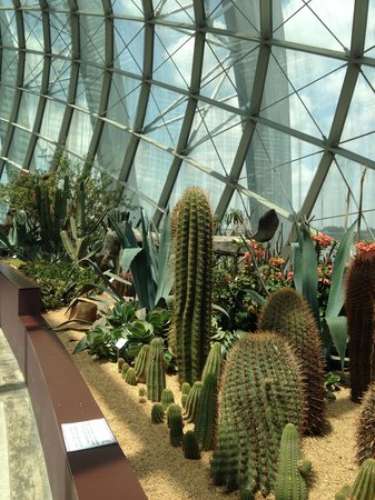 Flower Dome: Cactuses