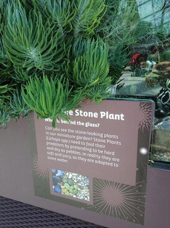 Flower Dome: Stone plants 1