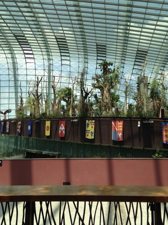 Flower Dome: Baobabs