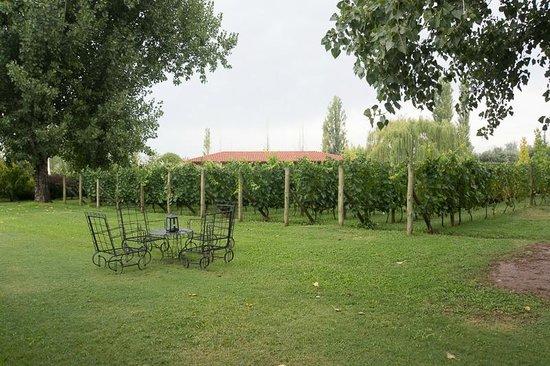 Posada Verde Oliva: Weinberg