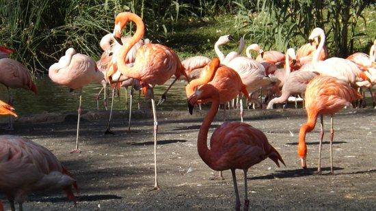 Prague Zoo: фламинго