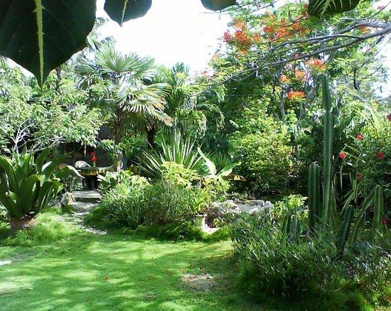Barneys Flower Hummingbird Garden Jamaica Negril 2017