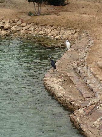 Brayka Bay Reef Resort: il bianco e il nero