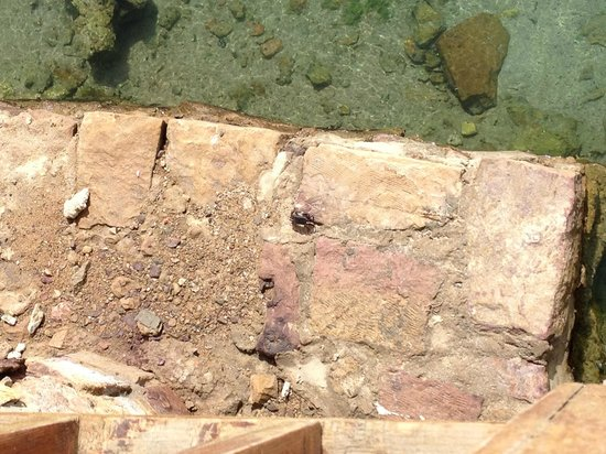 Brayka Bay Reef Resort: granchi molto grossi