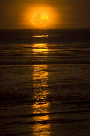 Broome with kids: This photo of Staircase To The Moon is courtesy of TripAdvisor