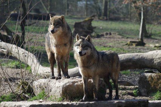 Parc Animalier de Sainte-Croix - Hébergements : loups gris
