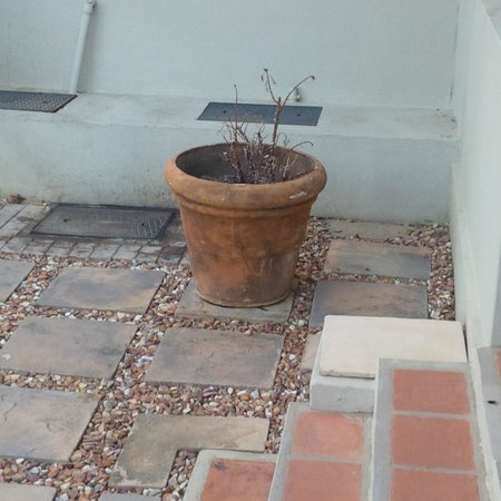 The Royal Hotel: Dead pot-plant in front of room