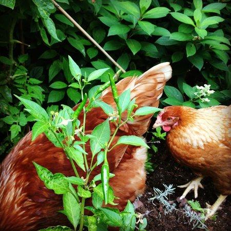 Sombat Thai Cuisine : Chicken in the garden