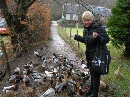 Auchrannie Resort: Feeding ducks