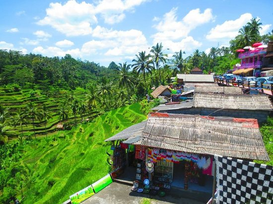 Tegalalang Rice Terrace : Wonderful rice terrace
