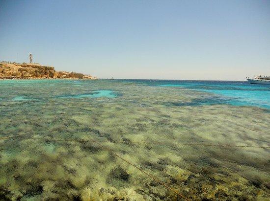 Reef Oasis Beach Resort : mare