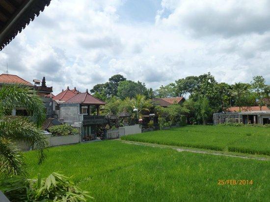 Ubud Lestari Bungalows : View over rice fields