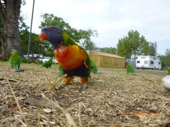 South Coast Holiday Parks Eden: wildlife in the caravan park......