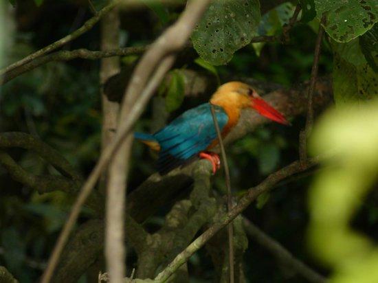 Osman's Homestay: Viele Vögel