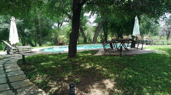 Cheetah Plains: Klein aber fein - der Pool
