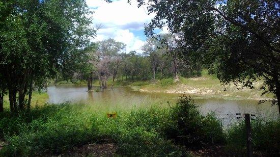 Cheetah Plains : Das Wasserloch