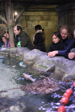 SEA LIFE Munich : looking at (not allowed to touch or feed) sting rays