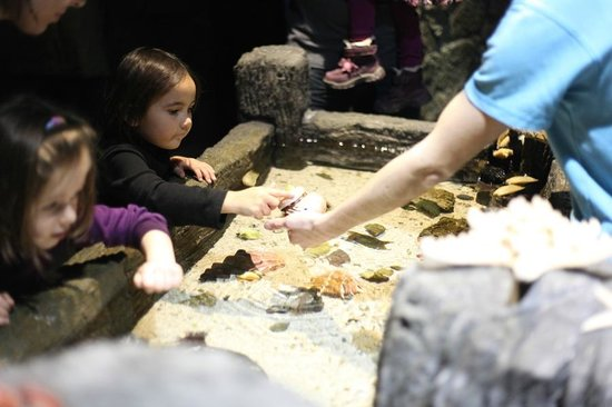 SEA LIFE München: the one area you could touch some starfish