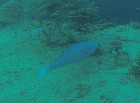 Scubatyme Dive Charters: Beautiful fish