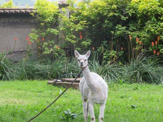 Hacienda Santa Ana : greetings from friends