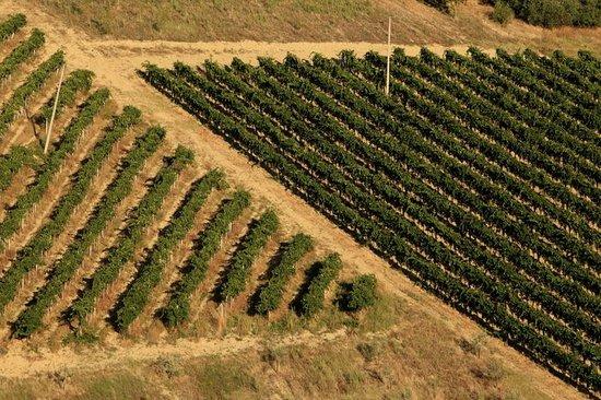 Azienda Agricola Biologica Fiorano