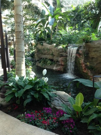 Gaylord Palms Resort & Convention Center : Atrium