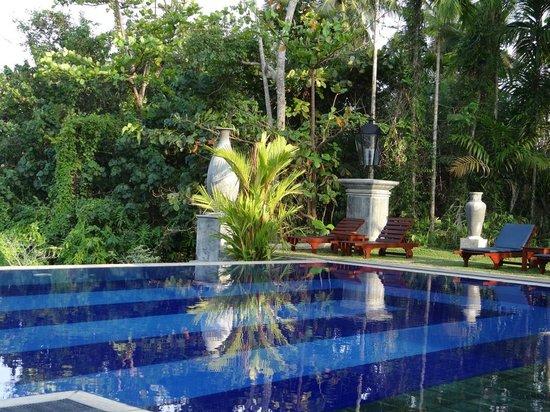 Amal Villa Apartments & Rooms : Blick vom Pool in den tropischen Garten