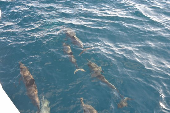 Shangri-La's Villingili Resort and Spa Maldives: Dolphin Cruise