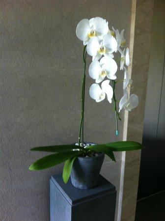 Fairmont Sanur Beach Bali: Orchids everywhere