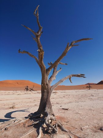 Sossusvlei Lodge: Deadvlei