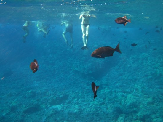 Molokini Crater: Fish and feet everywhere!
