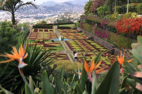 Madeira Botanical Garden : manicured gardens