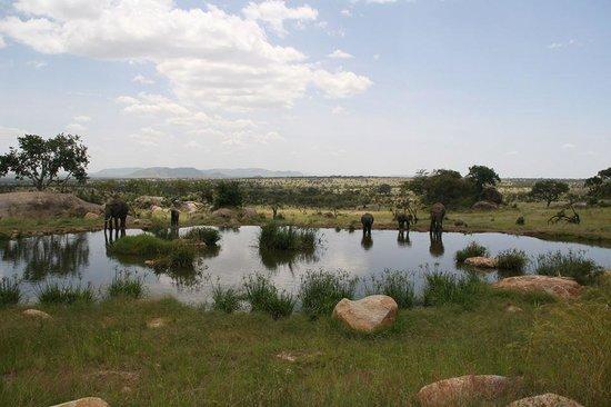 Four Seasons Safari Lodge Serengeti : Elephants enjoying an afternoon break at Four Seasons Safari Lodge