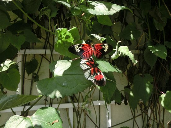 Butterfly World: Courting Couples