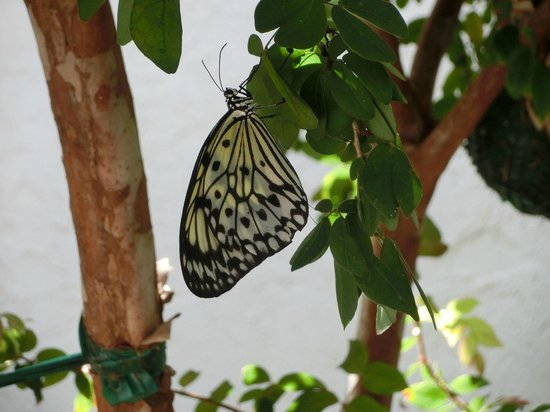 Butterfly World: Shady places to rest