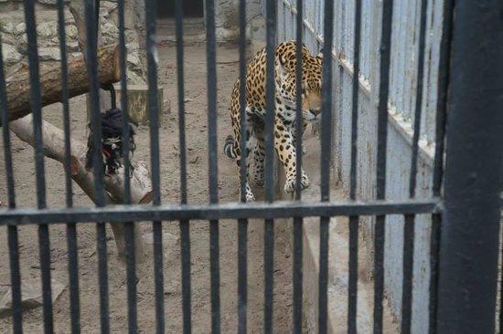 Krakow Zoo (Ogrod Zoologiczny): Zoo