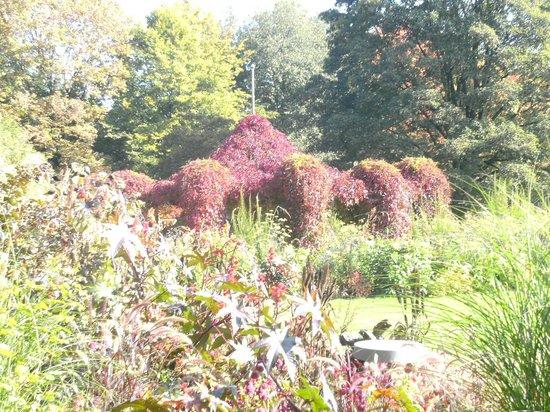 Botanischer Garten - Japan Garten: Herbst im Botanischen Garten Augsburg