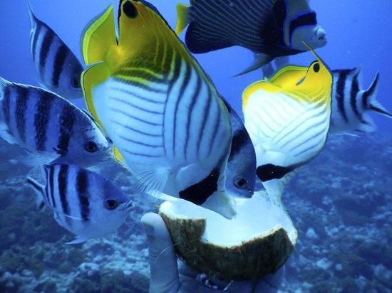 Bubbles Below : feeding fish