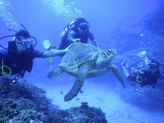 Bubbles Below: diving with turtles
