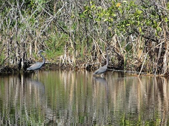 Everglades Area Tours : Two Cranes