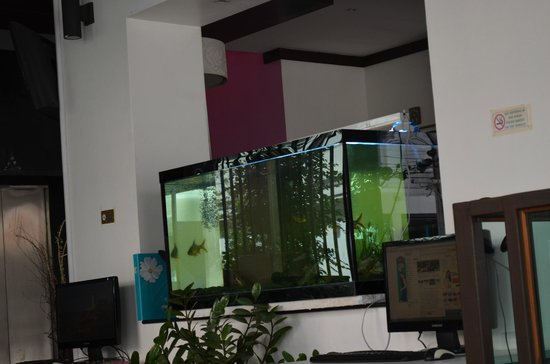 YK Patong Hotel: Лоби