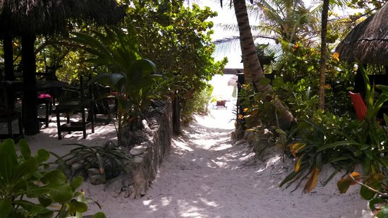 Dos Ceibas Eco Retreat: Sandy path through paradise