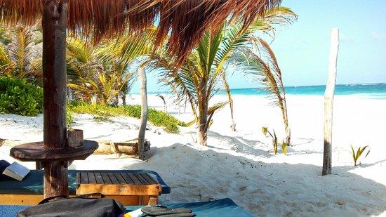 Dos Ceibas Eco Retreat : View down the beach
