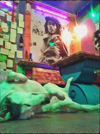 Reggae BR : doggy&Bob