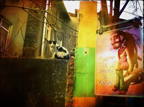 Reggae BR : a nearby cat
