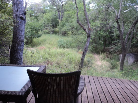 Londolozi Founders Camp: View from back deck with friendly nyala passing by